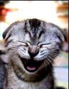 Sorriso - gatto